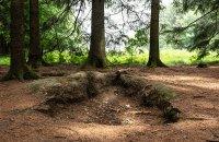 Foxholes of Bois Jacques